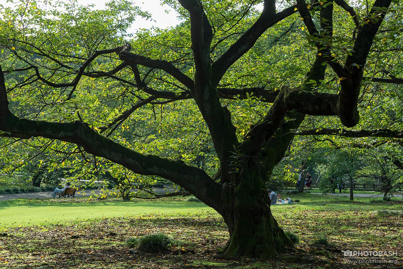 Parks-Gardens-Tree-Trunk-Silhouette.jpg