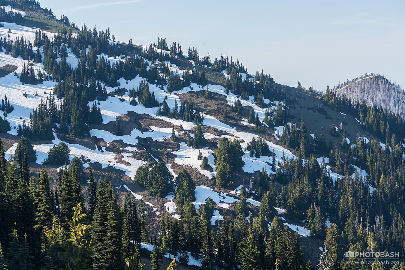 Pinewood-Mountains-Conifer-Slope.jpg