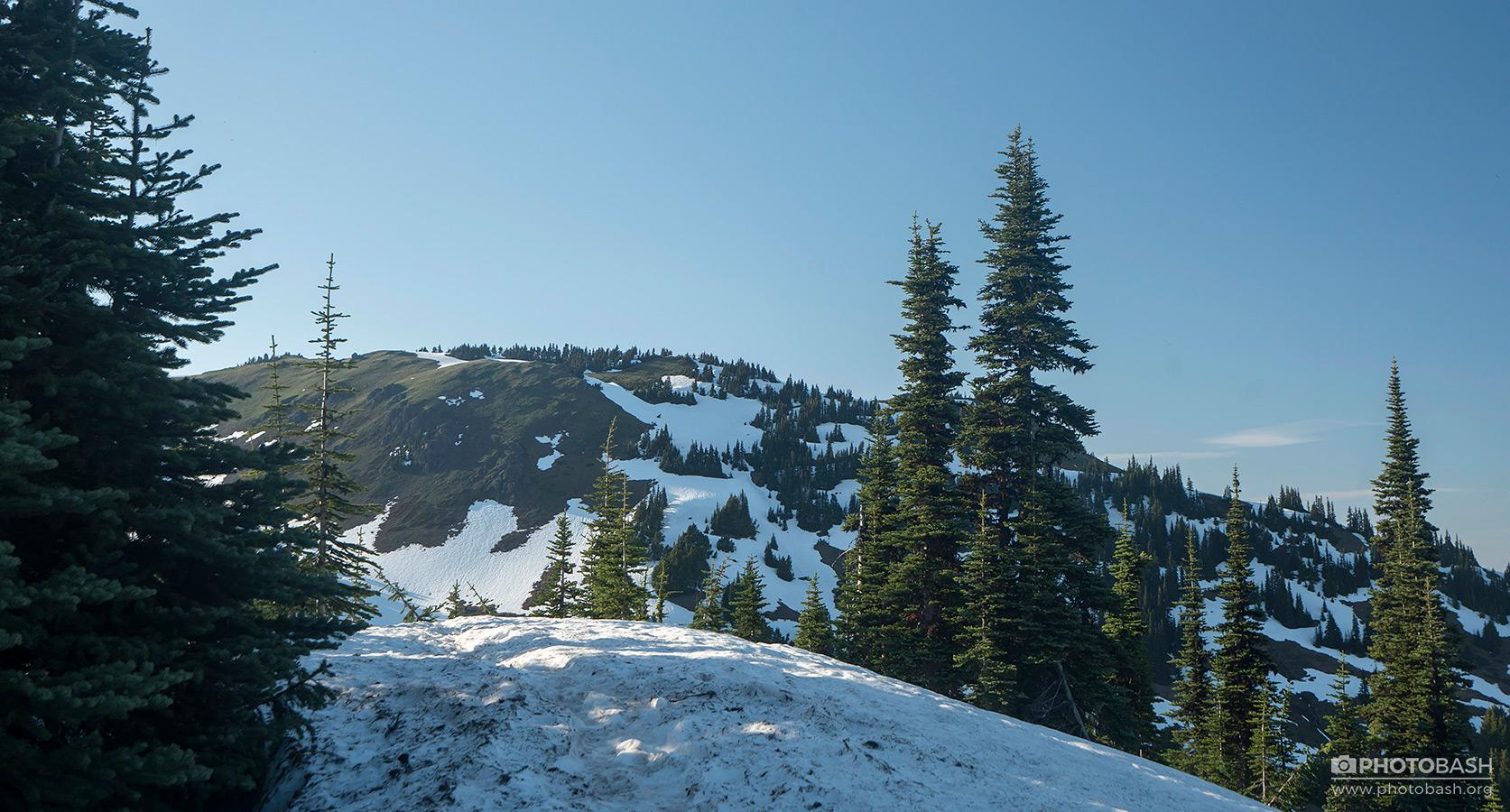 Pinewood-Mountains-Snowy-Spruce-Trees.jpg