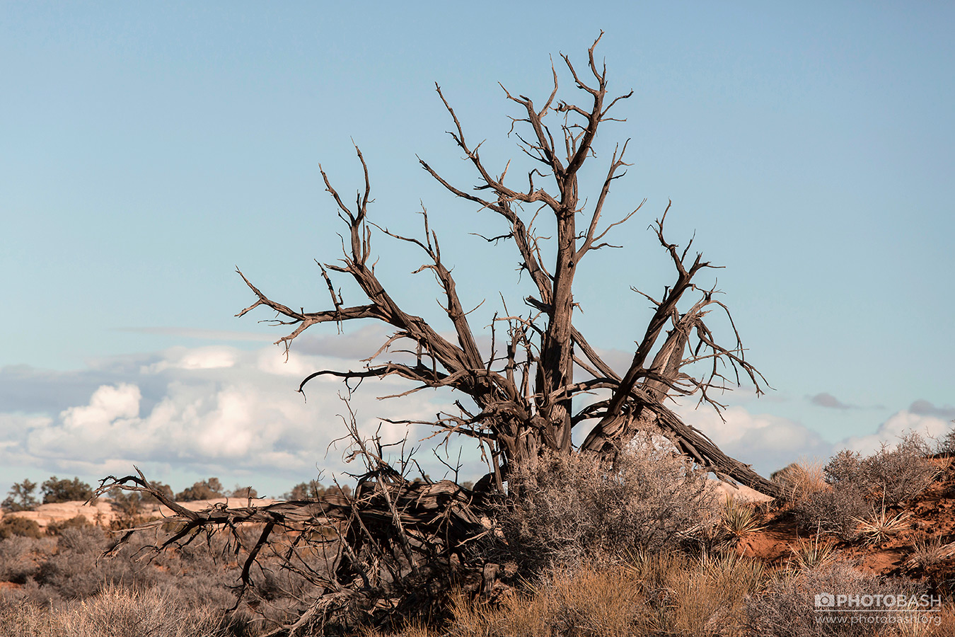 Red-Canyon-Dead-Tree-Branches.jpg