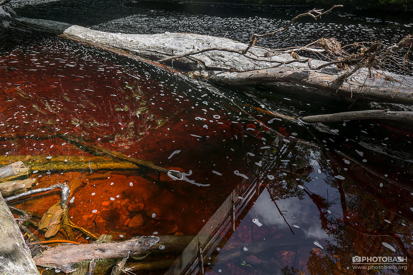 Red-Creek-Dead-Tree-Log.jpg