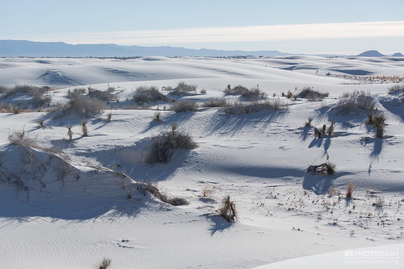 White-Desert-Dunes-Shrubs.jpg