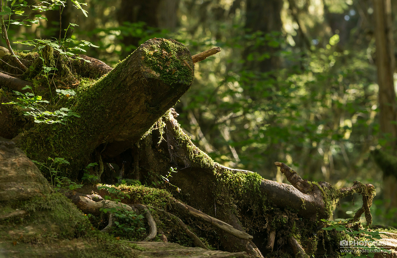 Ancient-Forest-Mossy-Trunk.jpg