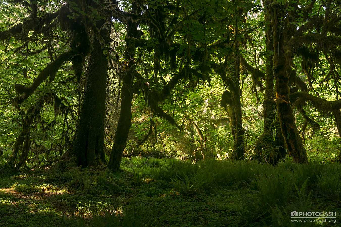 Ancient-Forest-Mossy-Woodlands.jpg