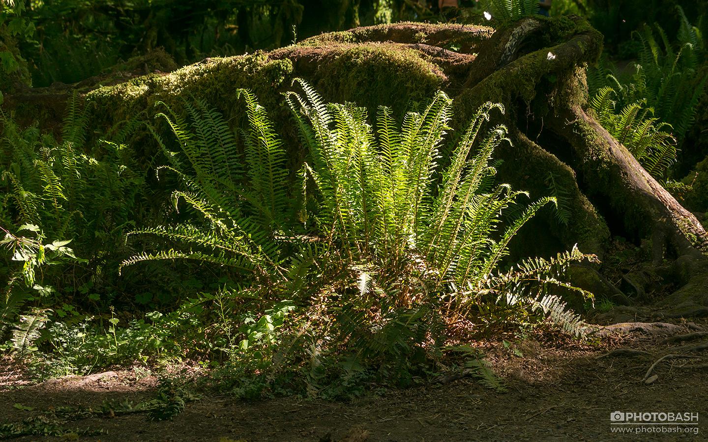 Ancient-Forest-Prehistoric-Fern.jpg