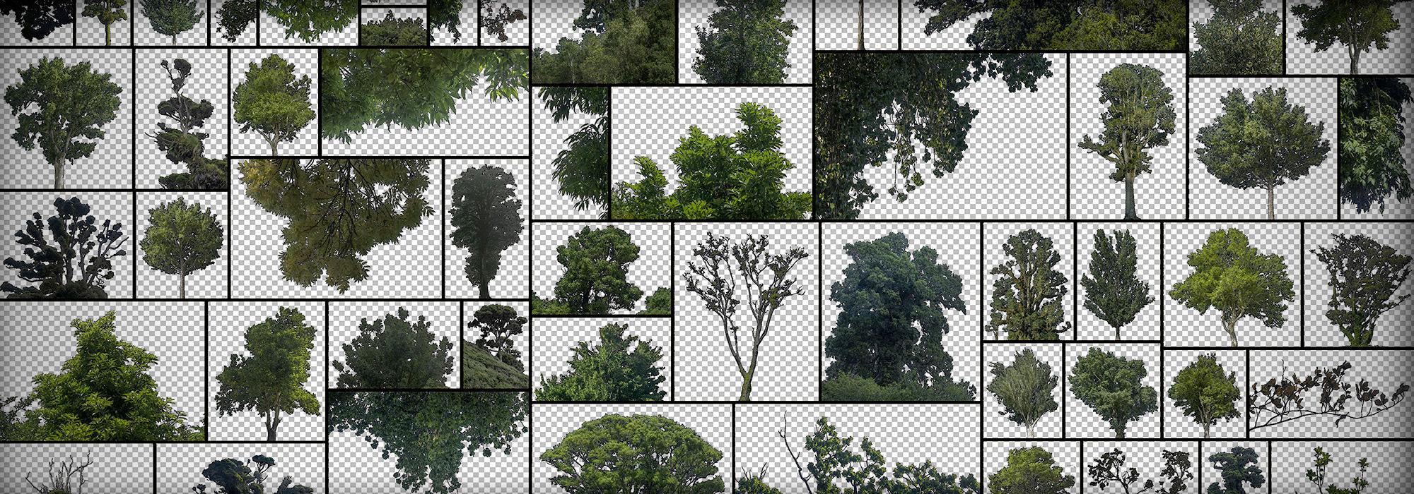 TreesMaskedAlphaPNG
