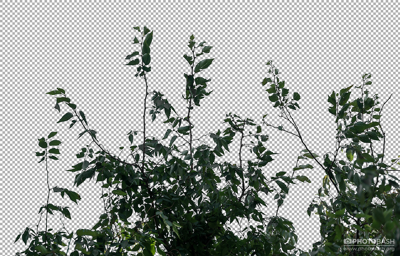 Deciduous-Trees-Alpha-Channel-Plants.jpg