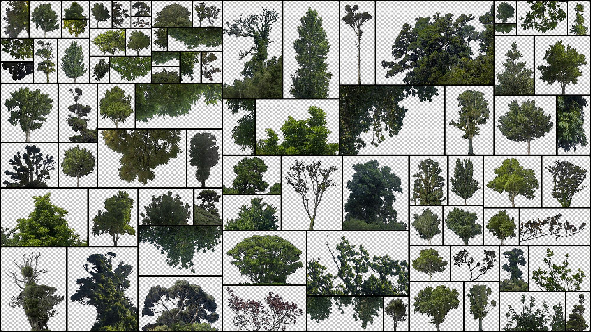 Deciduous-Trees.jpg