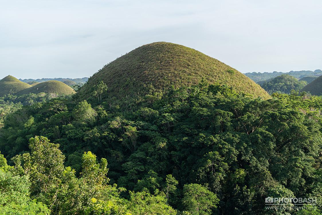 Tropical-Hills-Jungle-Mound.jpg