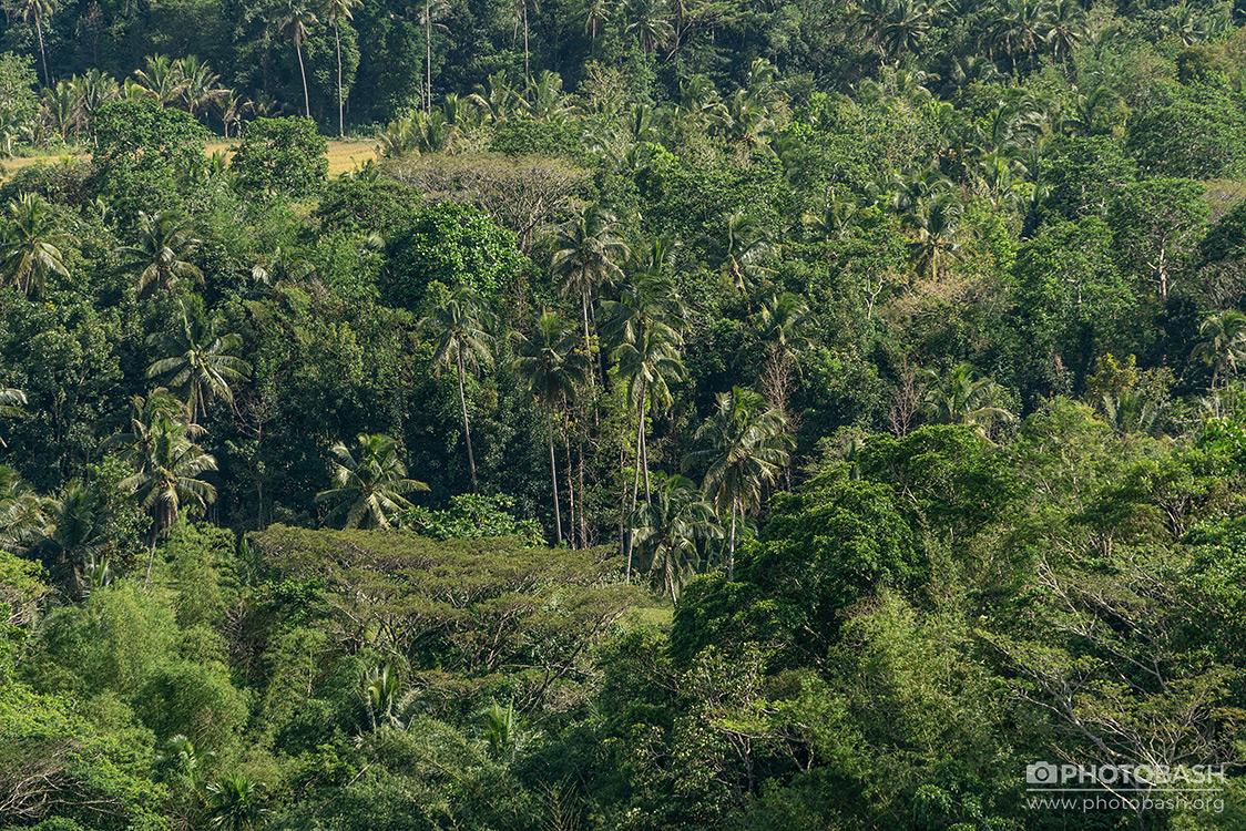 Tropical-Hills-Jungle-Texture.jpg