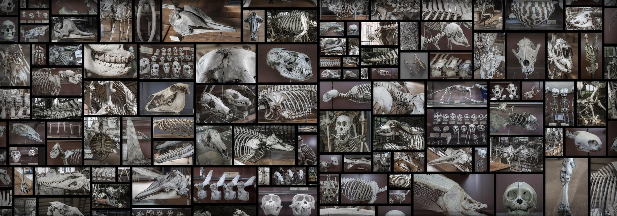 SkullsBonesSkeletonAnatomy