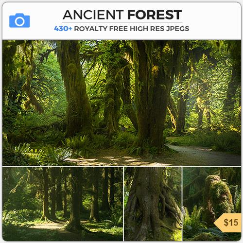 AncientForestMossyWoods