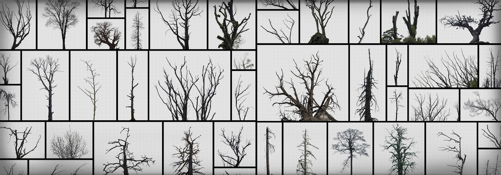 Dead Tree PNG Masked Branches