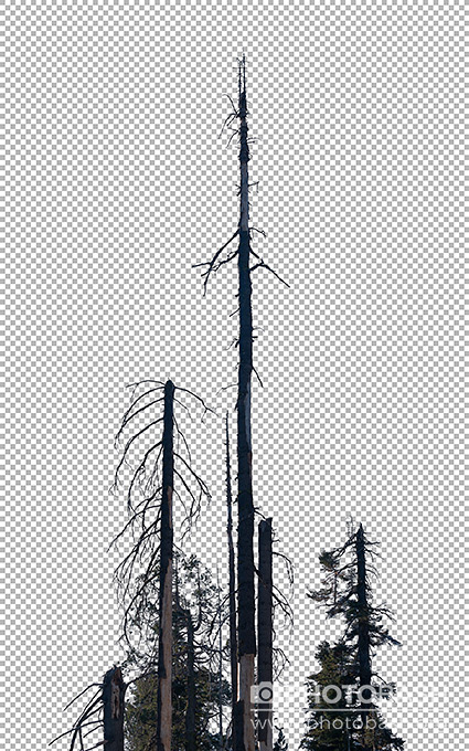 Dead-Forest-Trees-PNG.jpg