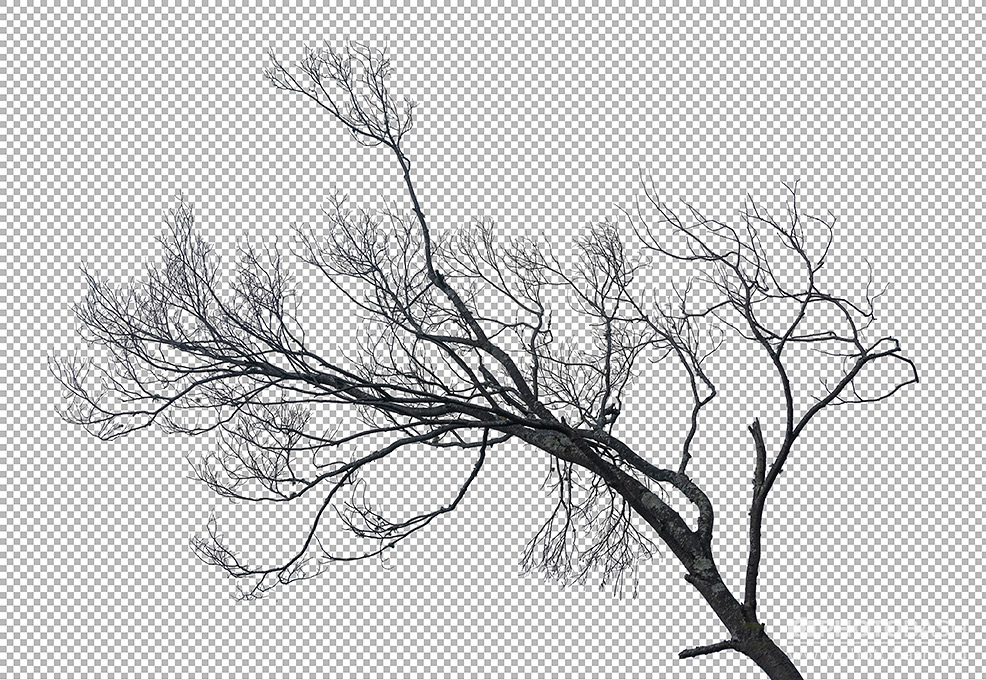 Dead-Tree-Branches-PNG.jpg