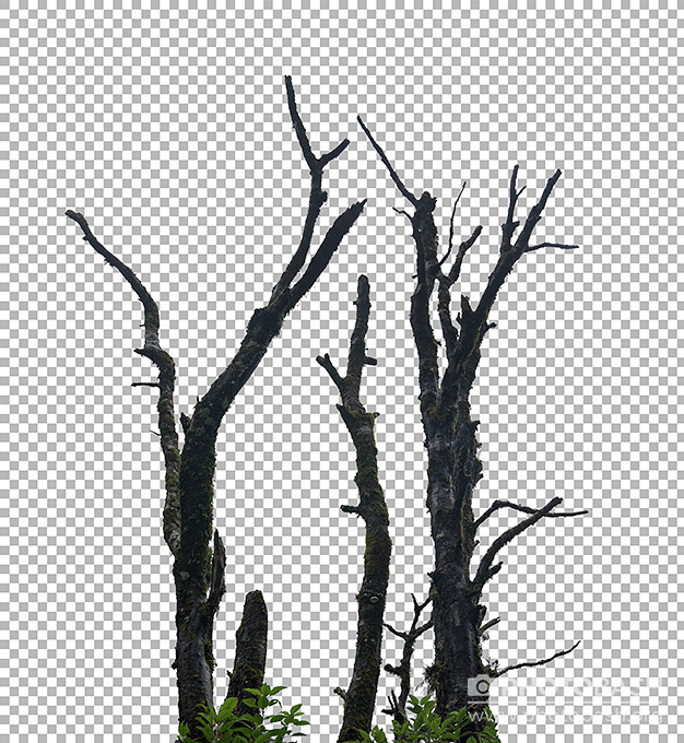 Dead-Tropical-Tree-Branches.jpg