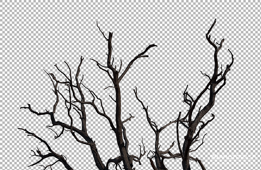 Dead-Witch-Tree-Branches.jpg
