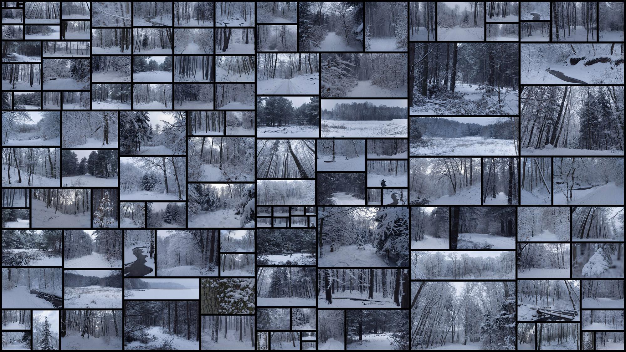 Winter-Forest.jpg