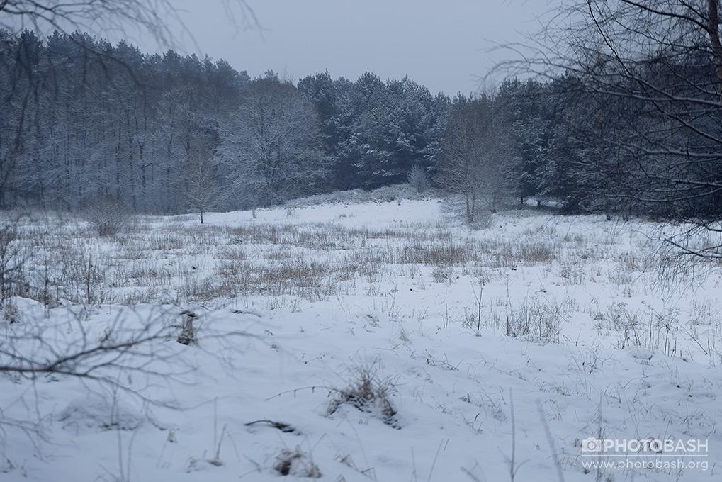 Winter-Forest-Frozen-Field.jpg