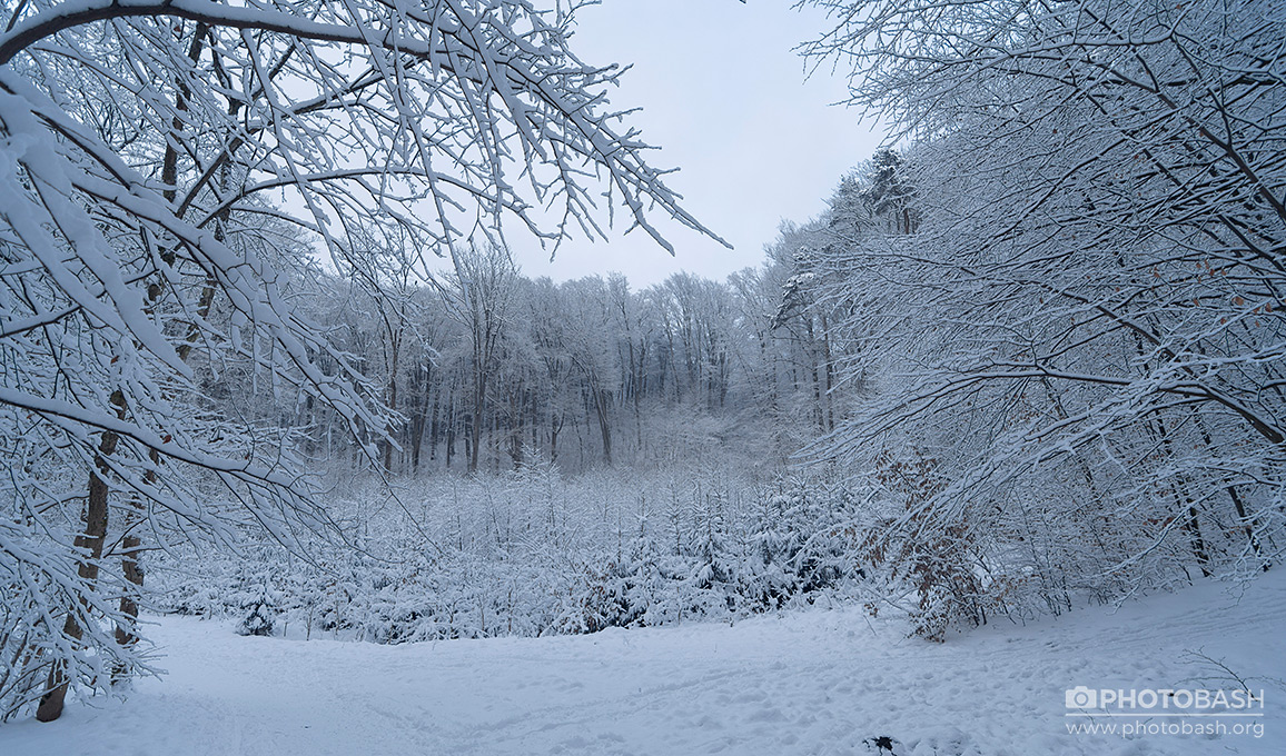 Winter-Forest-Snowy-Trees.jpg