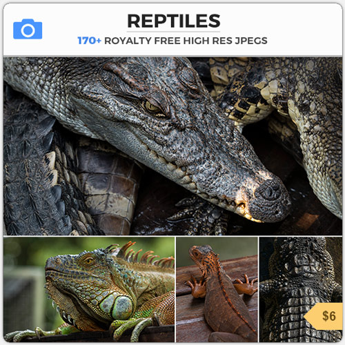Reptiles Lizard Texture Skin Godzilla
