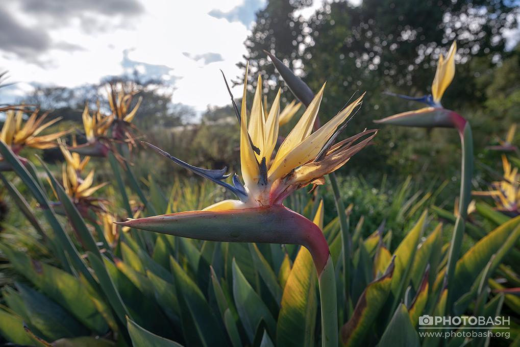 Prehistoric-Garden-Exotic-Flower.jpg