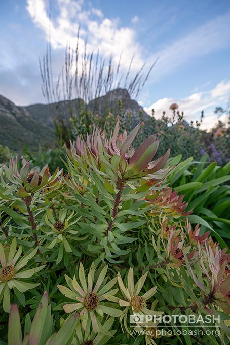 Prehistoric-Garden-Plant-Foliage.jpg