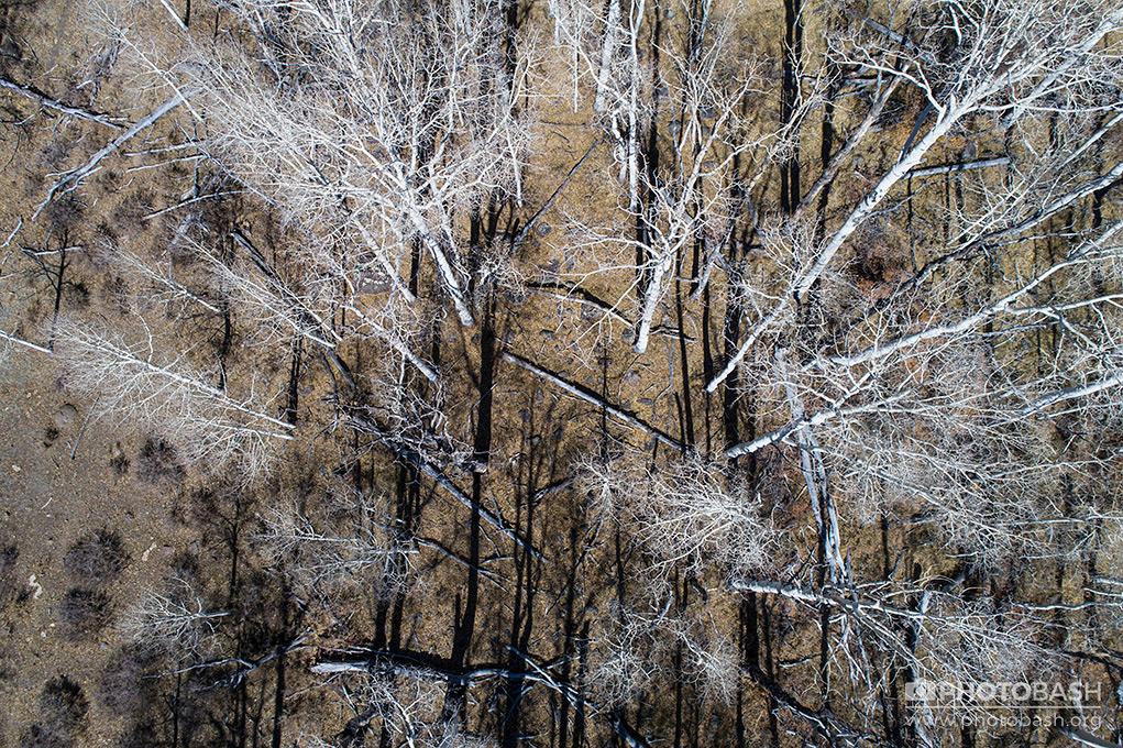 White-Forest-Aerial-Autumn-Woods.jpg