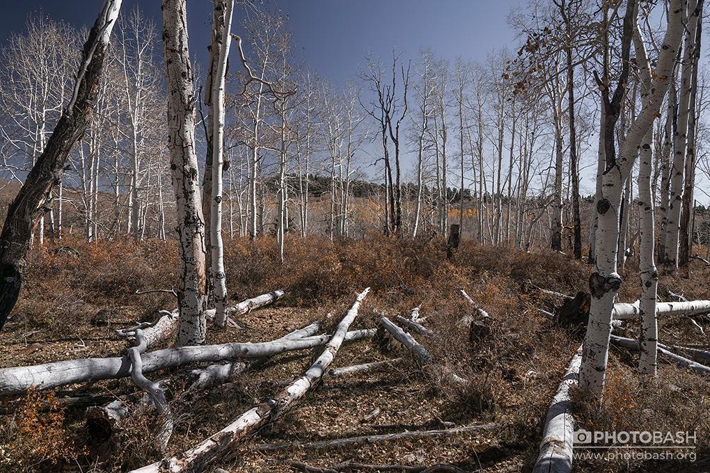 White-Forest-Fall-Woods.jpg