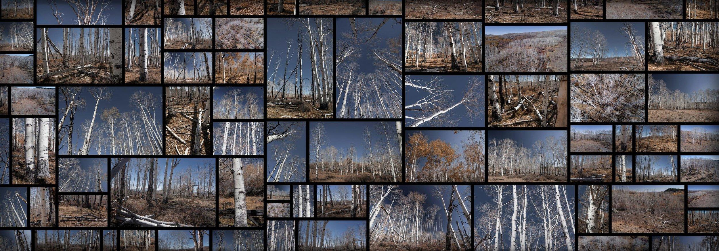 White Forest Dead Birch Trees Autumn