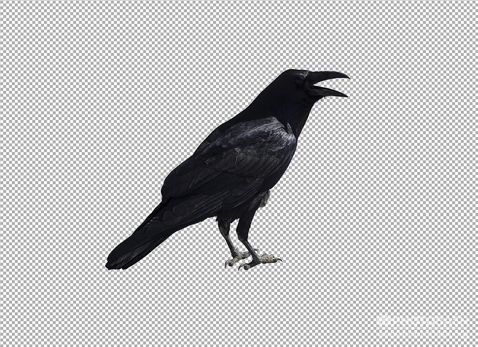 Crows-Ravens-Masked-Alpha.jpg