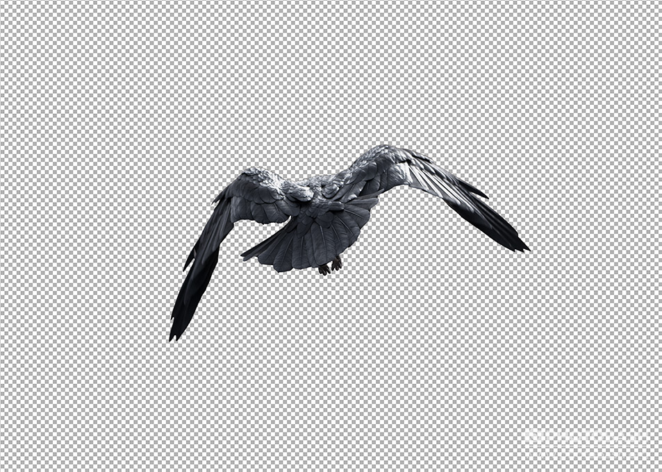 Crows-Ravens-PNG-Flying-Cutout.jpg