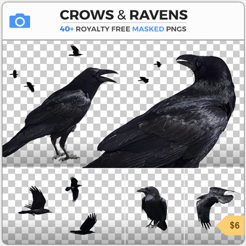 Crows Ravens Bird Flock PNG Alpha Cutout Masked