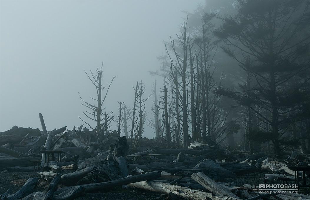 Dead-Coast-Fog-Forest.jpg