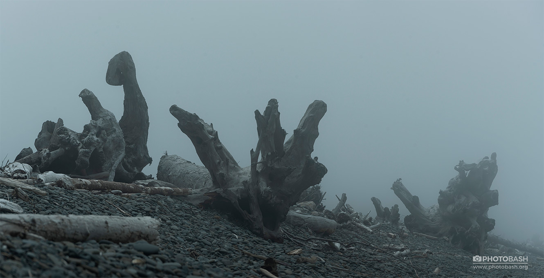 Dead-Coast-Tree-Roots-Silhouettes.jpg