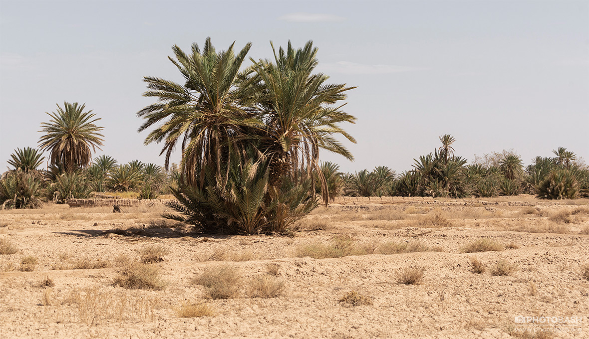 Desert-Palm-Grove-Arid-Environment.jpg