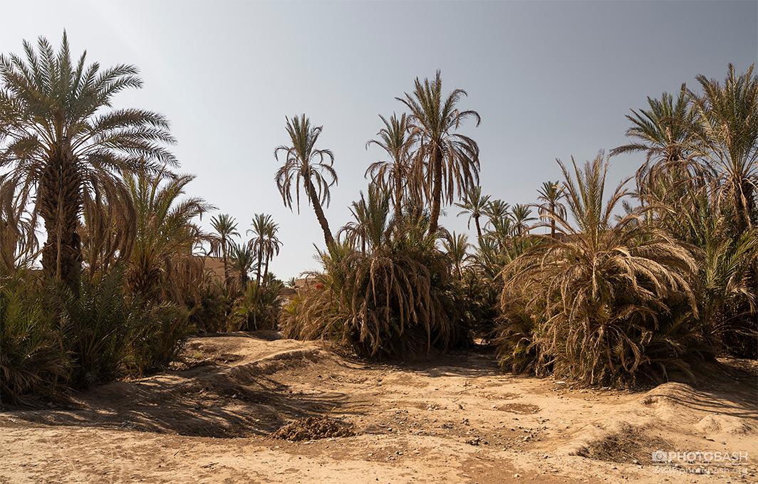 Desert-Palm-Grove-Dry-Oasis.jpg