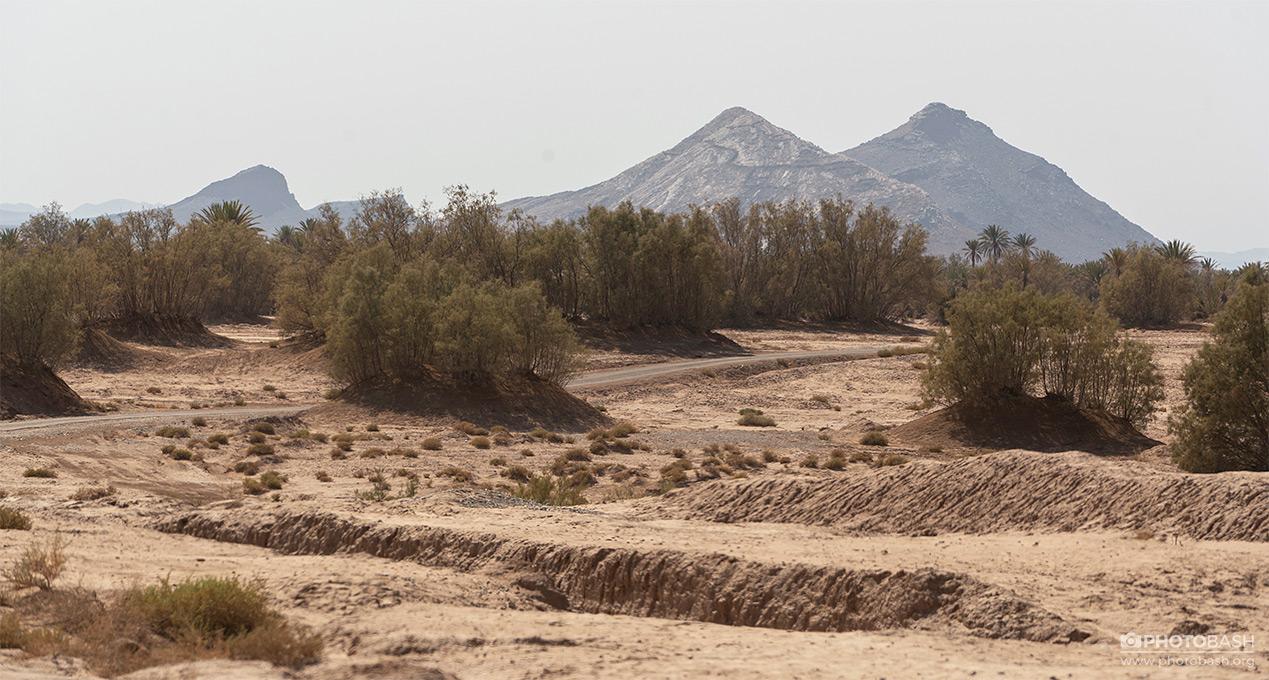 Desert-Palm-Grove-Morocco-Mountain.jpg
