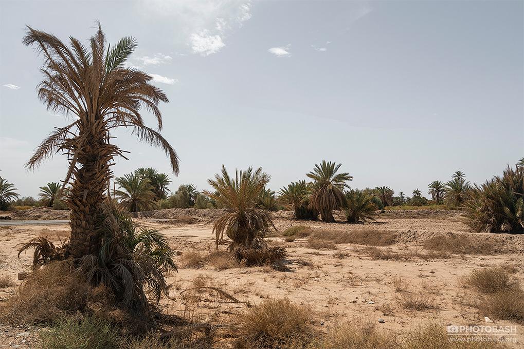 Desert-Palm-Grove-Morocco-Nature.jpg