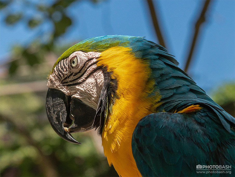 Tropical-Birds-Blue-Parrot-Creature.jpg
