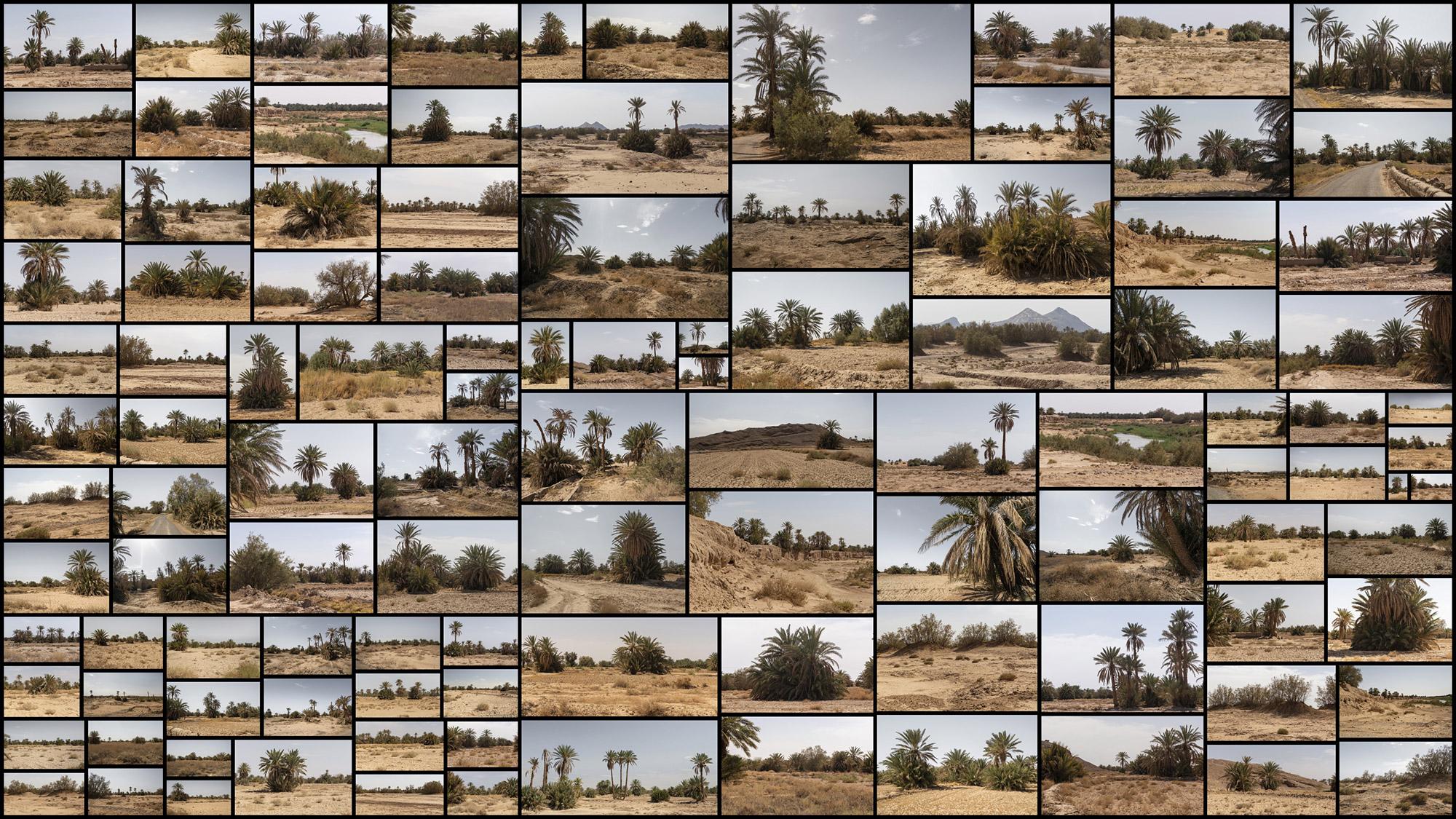 Desert-Palm-Grove.jpg