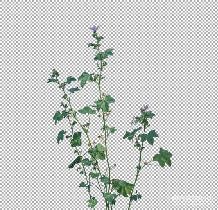 Grass-Weeds-Common-Plants.jpg