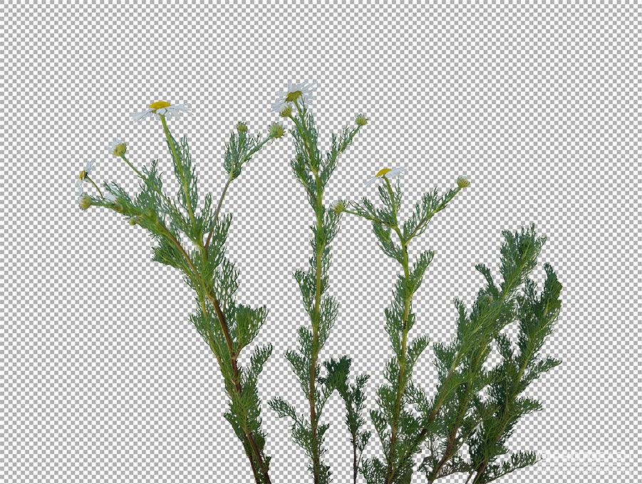 Grass-Weeds-Continental-Plants.jpg