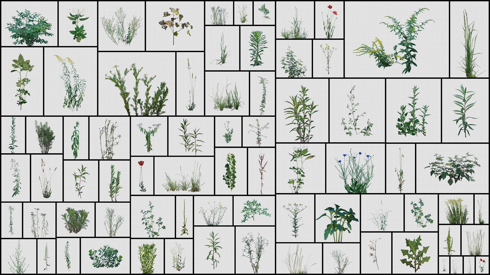 Grass-Weeds.jpg