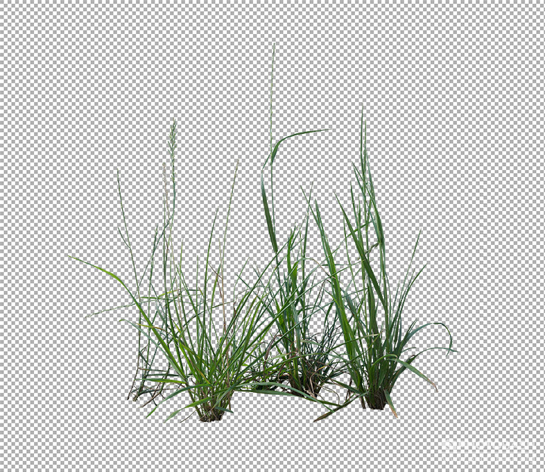 Grass-Weeds-Green-Shrubbery.jpg