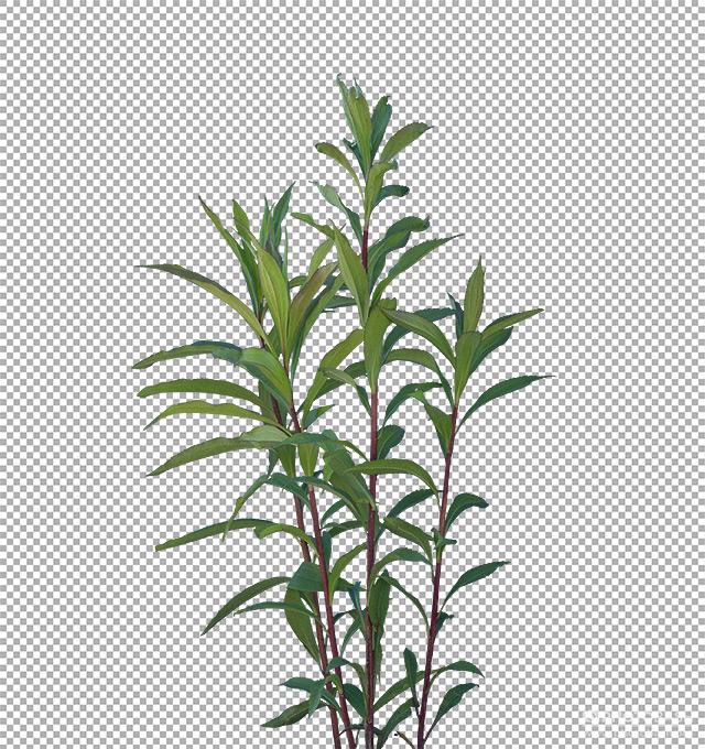 Grass-Weeds-Roadside-Plants.jpg