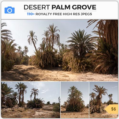 Desert Palm Grove Arid Desert Trees Morocco