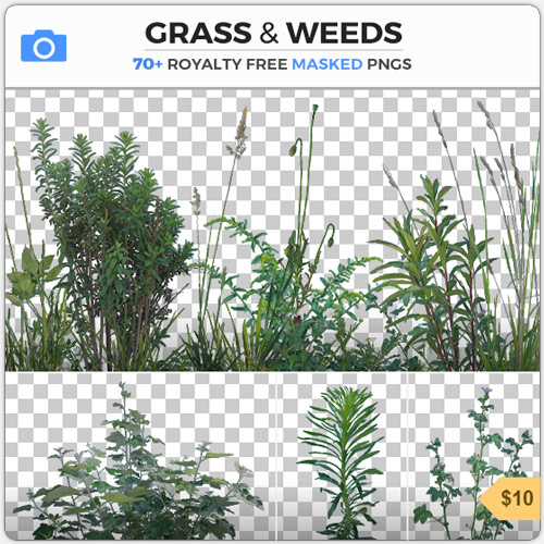 Grass Weeds Plants Foliage PNG Masked Alpha Leaves