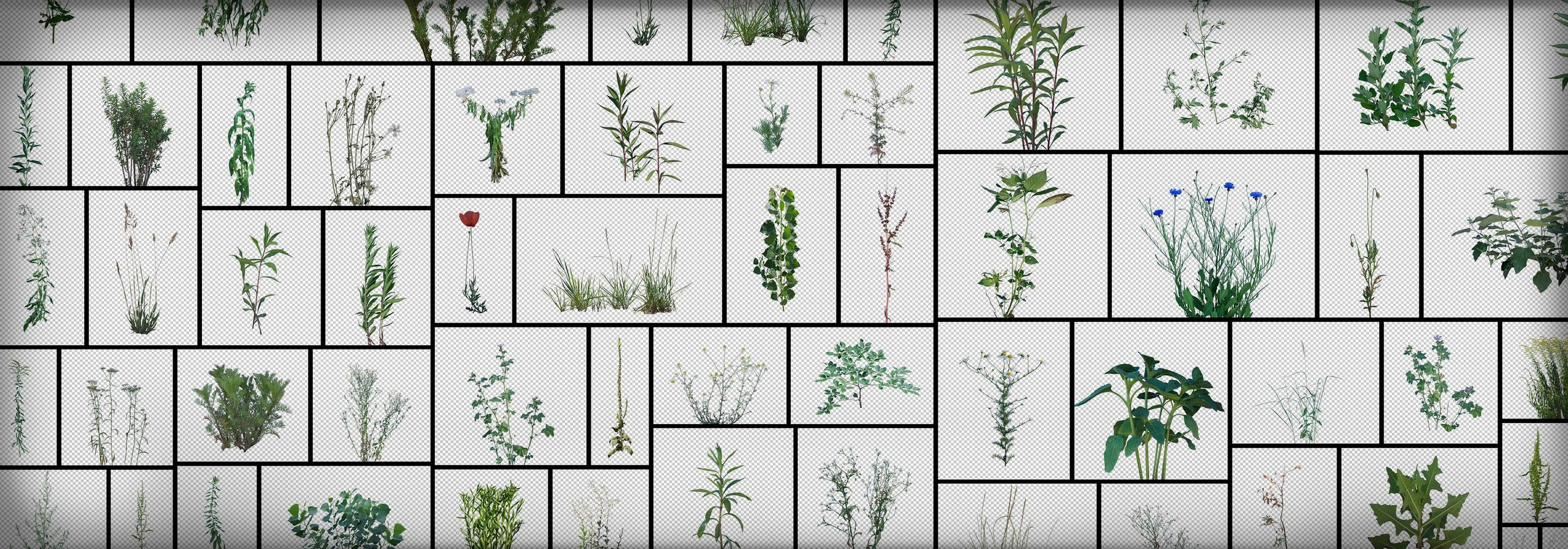 Plants Garden Grass Foliage Weeds Masked PNG