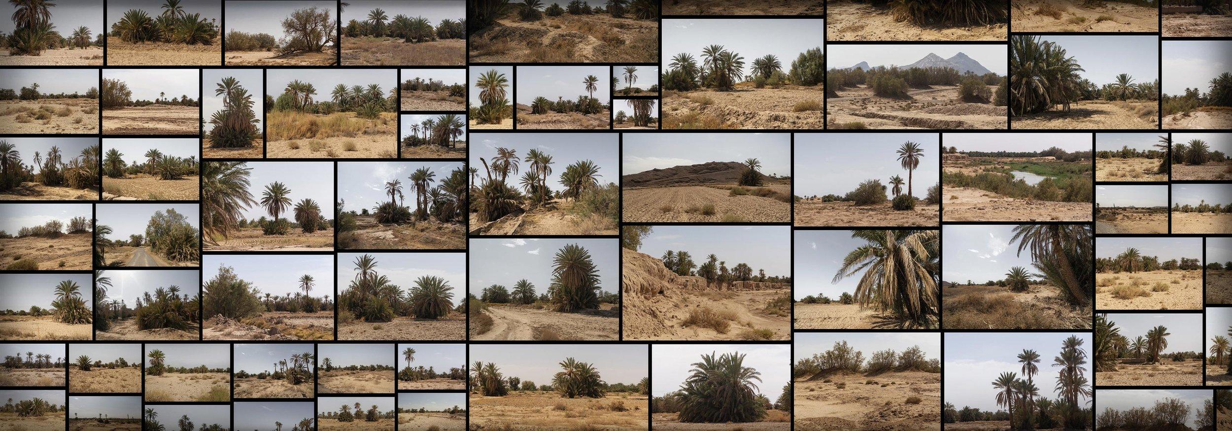 Desert Palm Grove Morocco Merzouga Oasis